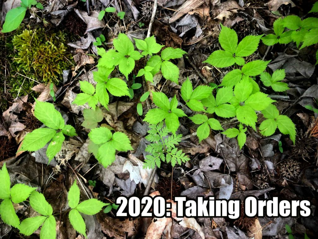Taking orders now for 2020 American ginseng seedlings. Local pickup only.